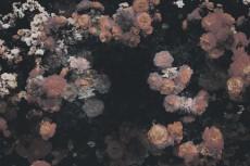 flower425-3