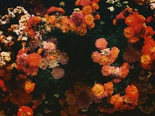 【高解像度】輪を描く絵画風の薔薇(3パターン)