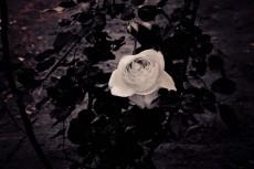 flower426