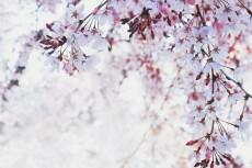 flower430