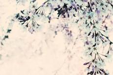 flower430-3