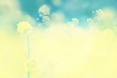 flower433