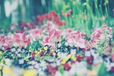 flower434-2