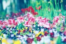 flower434