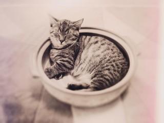 【高解像度】土鍋の中で眠る猫(ねこ鍋)(3パターン)