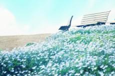 scenery313