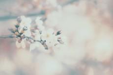 flower429-2