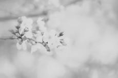 flower429-3