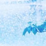 【高解像度】新芽と輝く水しぶき(3パターン)