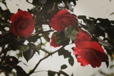 flower436