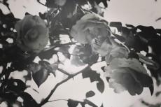 flower436-3