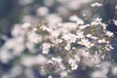 flower437-2