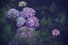 flower438-2