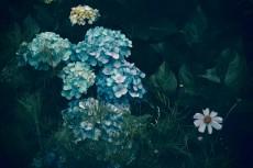 flower438