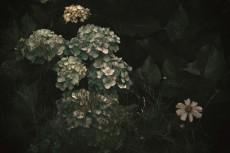flower438-3