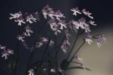 flower439