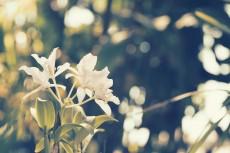 flower440-2