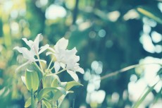 flower440
