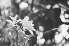 flower440-3