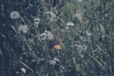 flower441-2