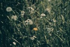 flower441