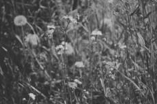 flower441-3