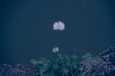 flower442-2