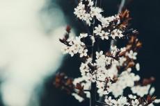 flower443-2