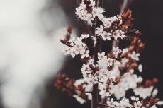 flower443