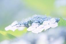 flower444