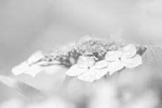 flower444-3