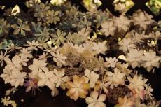 flower445-2