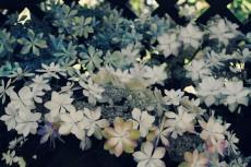 flower445