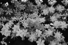 flower445-3