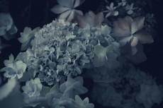 flower446-2