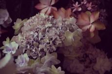 flower446