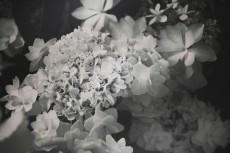 flower446-3