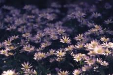 flower448