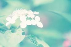 flower449-2