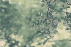 flower450-2