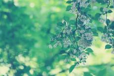 flower450
