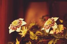 flower451-2