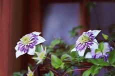 flower451