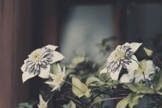 flower451-3
