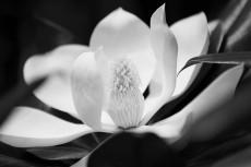 flower457-3