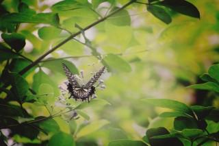 【高解像度】緑に囲まれた蝶の後ろ姿(3パターン)