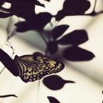 【高解像度】葉のシルエットと蝶(3パターン)