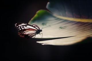 【高解像度】静かに翅を休める蝶(2パターン)