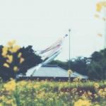 【高解像度】鯉のぼりと菜の花畑のノスタルジックな風景(3パターン)
