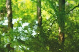 【高解像度】鏡面の森に散るエゴノキの花(3パターン)
